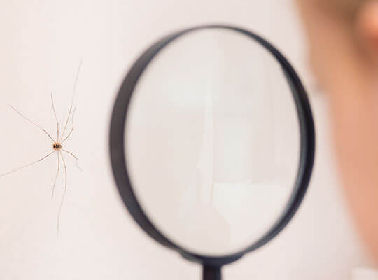 Child examining spider on wall, through magnifying glass.